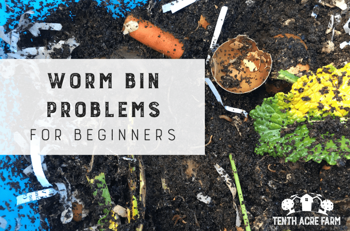 Worm bins are a simple way to compost food scraps. Learn about some of the nuances and worm bin problems facing beginners and how to fix them. #microfarm #wormbin #vermicomposting #composting